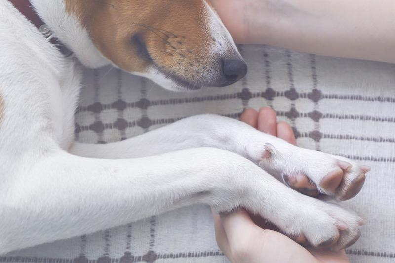 How to Know When to Put Your Dog Down