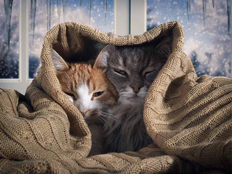 Bonded Cats