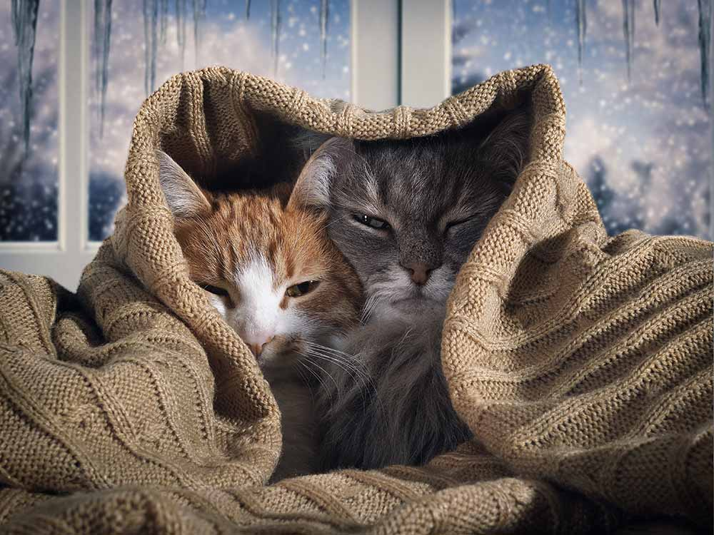 What Happens to Bonded Cats When One Dies?